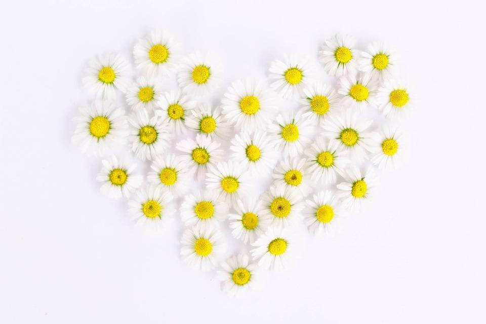 daisy-1535532_960_720
